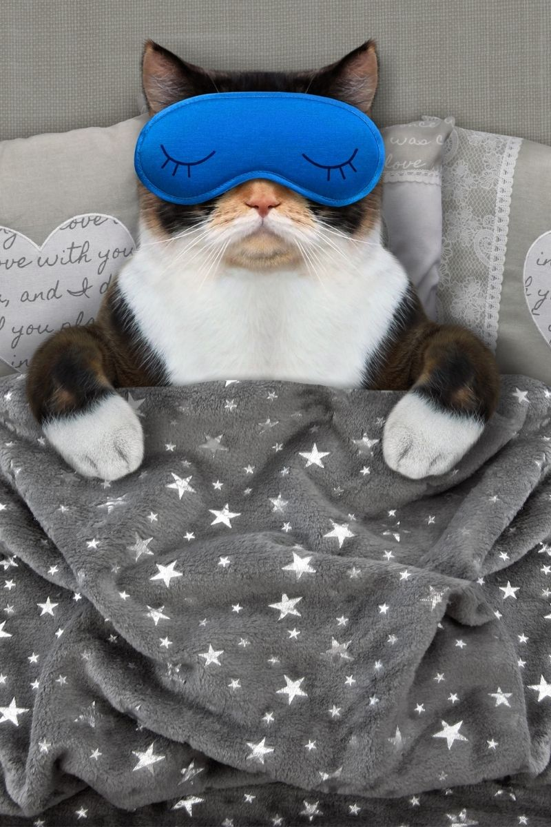 black and white cat in bed wearing a blue sleep mask